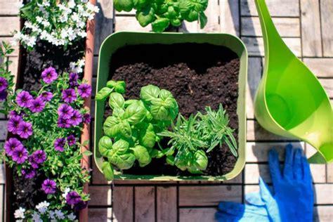 come coltivare in casa come coltivare l orto in casa non specare