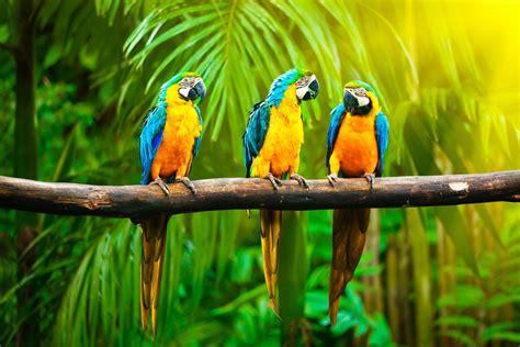 bird l wallpaper macaw parrot tropics animals 4566
