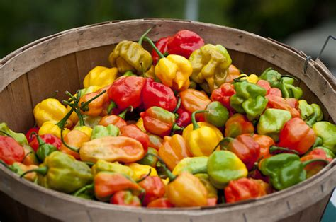 Chile Pepper Festival To Heat Up Brooklyn Botanic Garden Botanic Garden Chili Pepper Festival