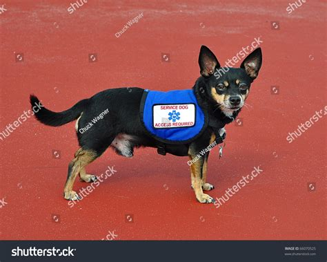 small service dogs small service standing background stock photo 66070525