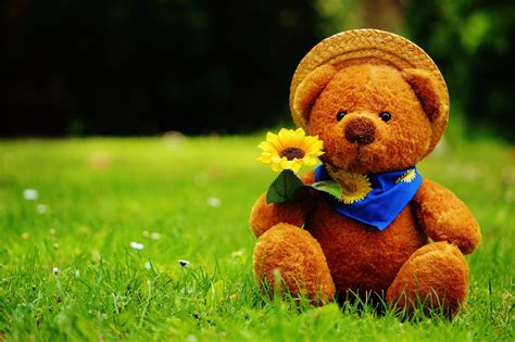 full hd video teddy bear teddy bear hd wallpaper