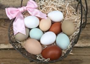 chickens that lay colored eggs a guide to different colored chicken eggs blue to