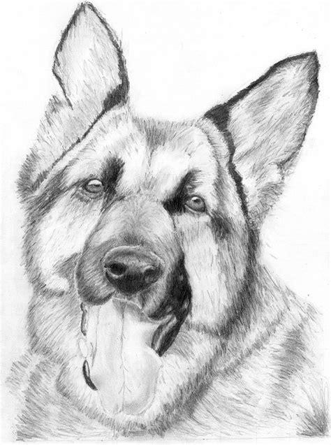 imagenes a lapiz de perritos dibujos de perritos a lapiz imagui