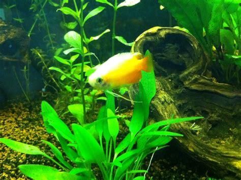 Mon Aquarium 54l Communautaire Mon 54l Population Asiatique