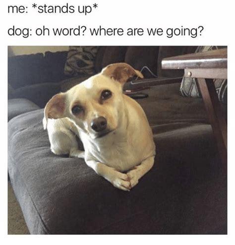Dog Poop Meme