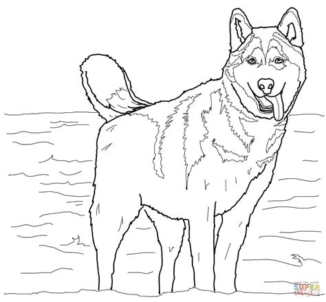 coloring pages of husky puppies siberian husky coloring page free printable coloring pages