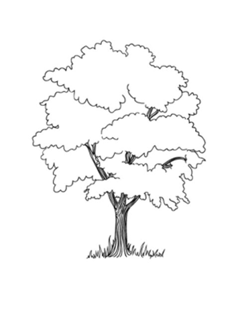 coloring page of oak tree image gallery oak tree coloring