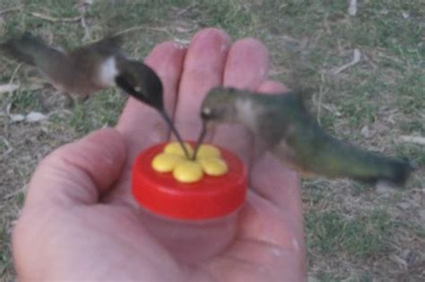 hand held hummingbird feeder have them drinking from