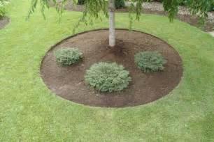 Landscape Edging Around Tree Roots Landscape Edging Ideas Around Trees Landscaping