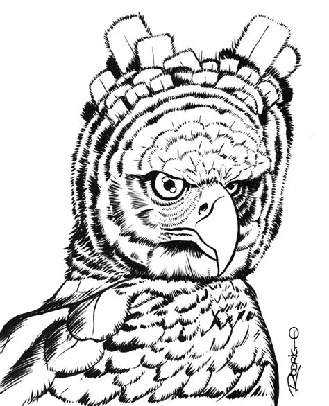 coloring page of harpy eagle harpy eagle drawing for kids www imgkid com the image