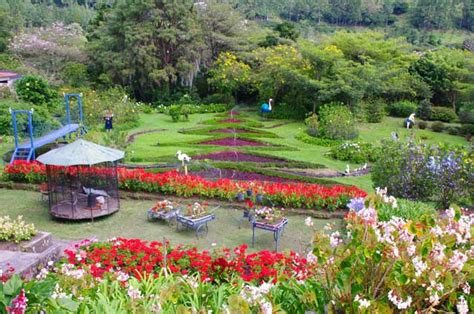 big garden filled with many types os flowers that gives a beautiful contrast with the green