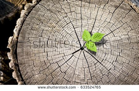 stump pattern new leaf vector rough aged wood texture cross stock vector