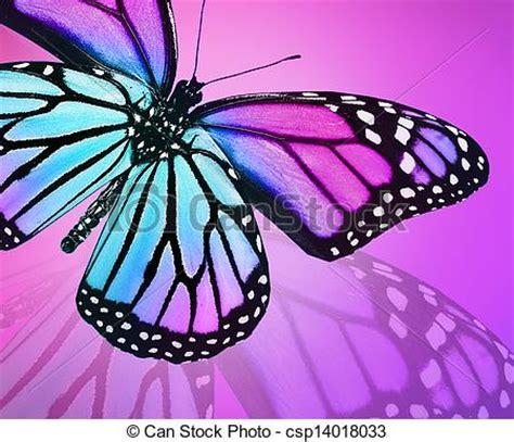 imagenes mariposas violetas dibujos de azul mariposa plano de fondo violeta azul