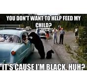 Black Bear Funny Meme