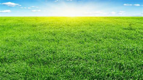 imagenes de verdes praderas praderas wallpapers