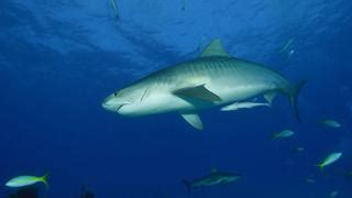best dive spots in the caribbean eleven of the best scuba diving spots in the caribbean