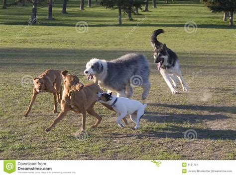 Making Credit Cards - dog romp stock image image 1181701