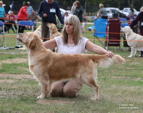 golden retriever breeders in scotland golden retriever breeders uk midlands dogs our friends photo