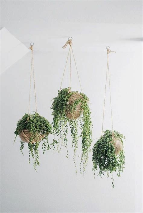 Potted Plant Hangers - hanging houseplants pictures of hanging baskets lovely