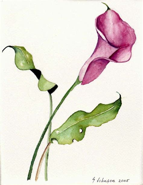 small calla lily tattoos best 25 lilies ideas on lillies