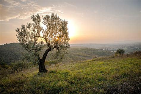 landscape trees landscape tree sunset 183 free photo on pixabay