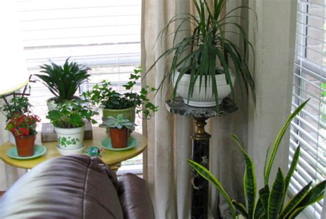 best living room plants indoor plants
