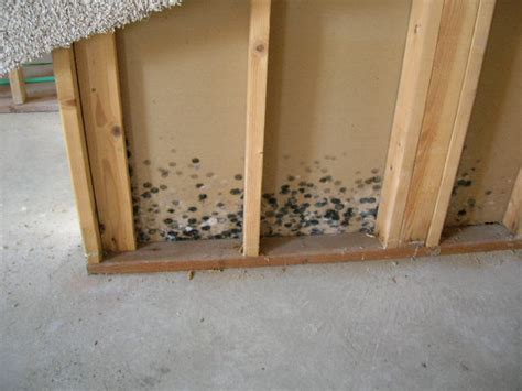 what causes mold in basement one free 4 x 8 sheet of mold resistant drywall get dwell