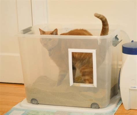 my old dog keeps peeing in the house for my cats on pinterest cat litter boxes litter box