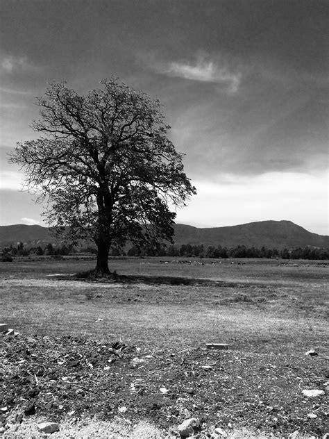 Fotos gratis : paisaje, árbol, naturaleza, césped