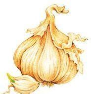 is garlic poisonous to dogs is it safe to give garlic to dogs science says