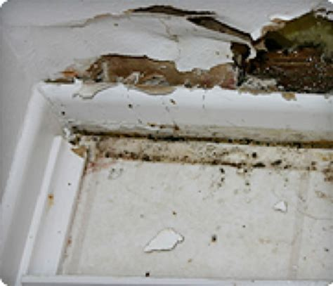 how to prevent mold in house 100 how to prevent mold in basement 2 simple ways to kill