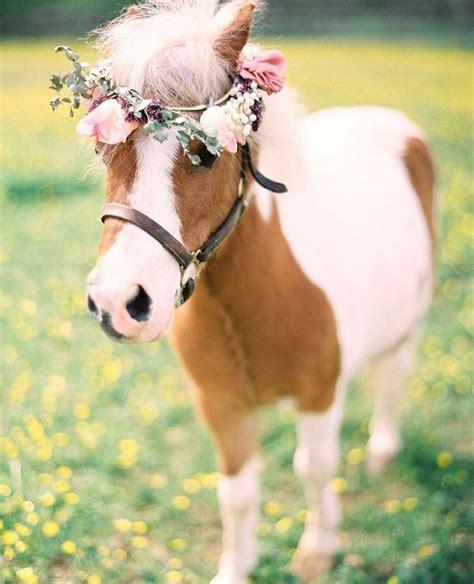 pin  betty baker  minis horses pretty horses cute