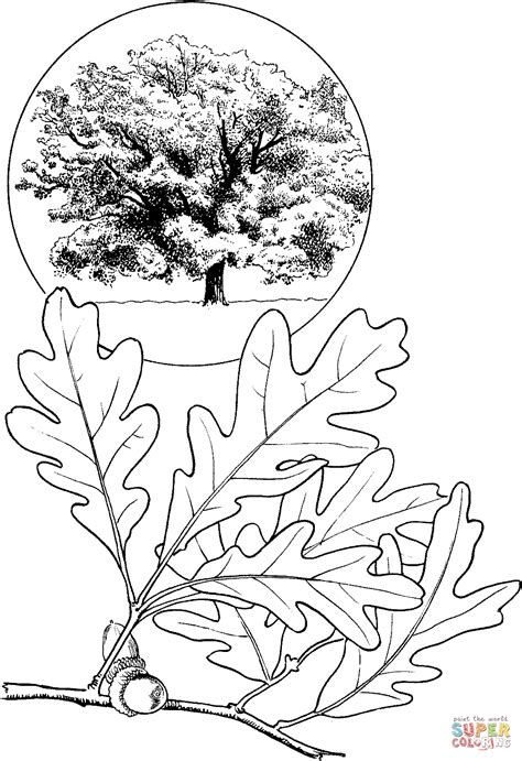 coloring page oak tree white oak tree coloring page free printable coloring pages