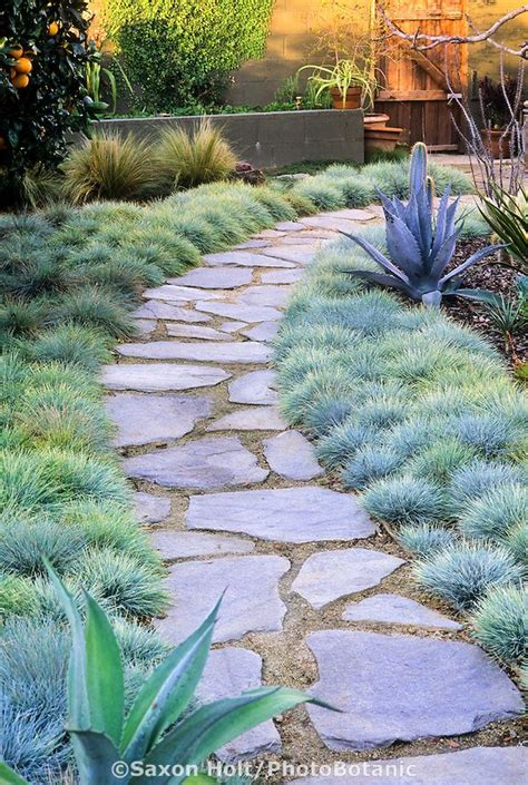 patio orange tree best 25 flagstone path ideas on