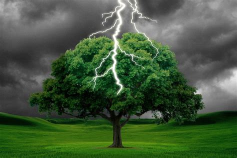 when is the lighting of the tree what happens when a tree is struck by lightning 187 science abc