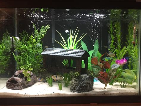 freshwater fish tank decoration ideas fish tank decoration ideas for charming and refreshing well planted 20 gallon aquariums google search pinteres