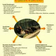 kaspar hauser experiment untersuchungsmethoden der verhaltensbiologie in biologie