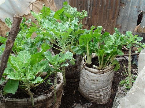 Kitchen Garden Farming In Kenya Vertical Farming Fighting Poverty And Food Insecurity In