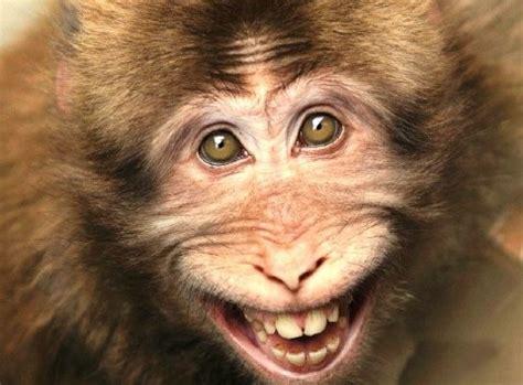 fotos graciosas de animales con frase curio sida des fotos curiosas y graciosas de animales dogguie