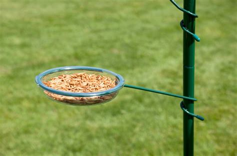 hangers for bird feeders birdcage design ideas