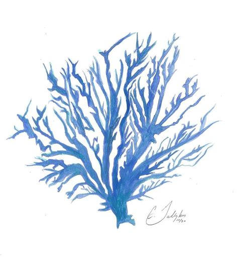 original coral watercolor painting painting by christian