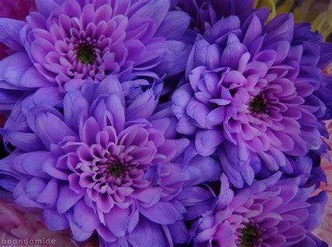 world best flower best favorite flowers in the world purple flowers