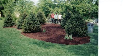 b s landscaping mulch pine trees