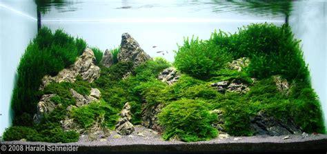 Perlengkapan Aquascape Less Moss Adhesive 2008 aga aquascaping contest 132
