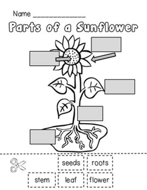 Sunflower Life Cycle and Pl... by Teacher Laura | Teachers