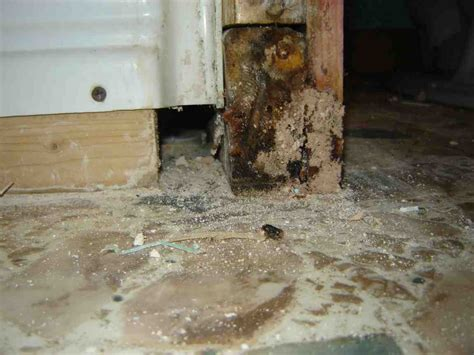 mold on bathroom wall mold on bathroom walls how to get rid of mildew u0026
