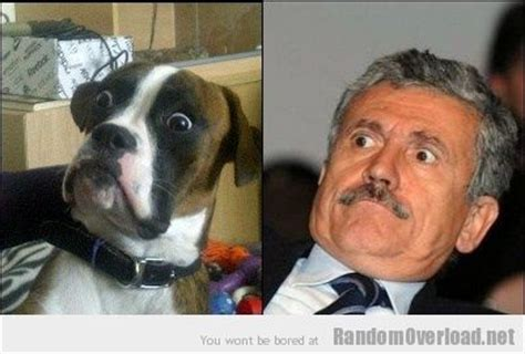 dogs look like owners in dogs that look like their owners competition 32 pics thedailytop