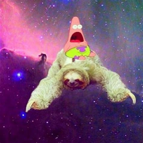 love sloths  surprise patrick sloth  spirit animal sloths funny
