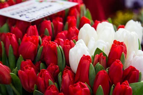 mercato dei fiori torino fiori torino mercati