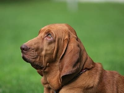 8 Cool Breeds by 8 Cool Breeds Lifestyle